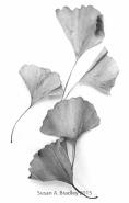 Fallen Leaves-Gingko Var1