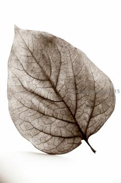 Fallen Leaves - Persimmon Var1