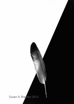 Feather Series Var3