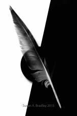 Feather Series Var9