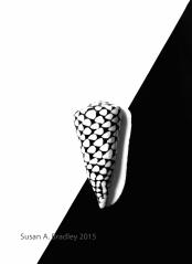 Harlequin Cone on Black and White Var1