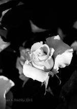 Moms Rose Var1