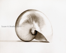 Nautilus Perspectives in Brown-No5
