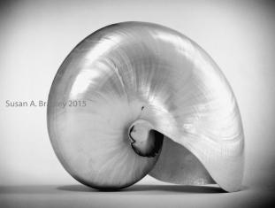 Nautilus Var1