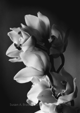 Orchid Series-Afternoon Var1