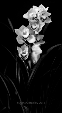 Orchid Series-Smiling No1