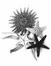 Starfish Var7ST