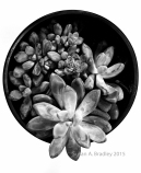 Succulents Potted Light Var1