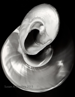 Top Shells Var1ST