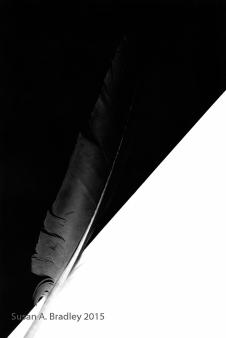 Feather Series Var8