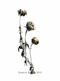 Mead Flower Buds Painted Var1