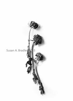 Mead Flower Buds Var1