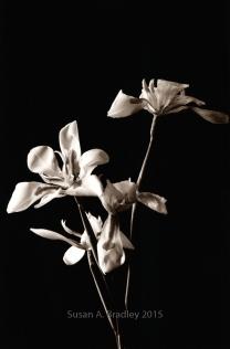 Wild Iris 2BT