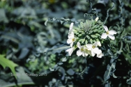 Emeryville Vegetable Garden No1