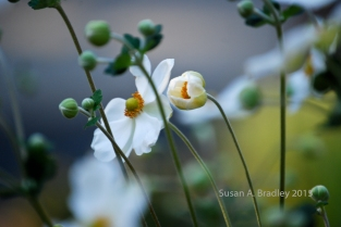 Forest Ranch Flowers No1
