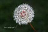 Oakland Weeds No1