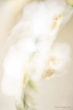 Playing with Orchids 2