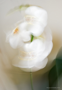 Playing with Orchids 1