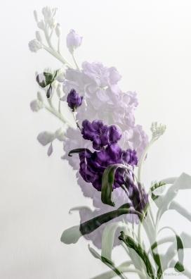 Play in Purple 5